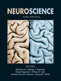 Neuroscience 5th Edition